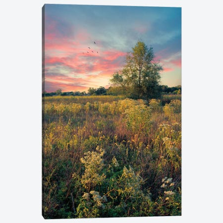 Grateful For The Day Canvas Print #RVR16} by John Rivera Canvas Wall Art