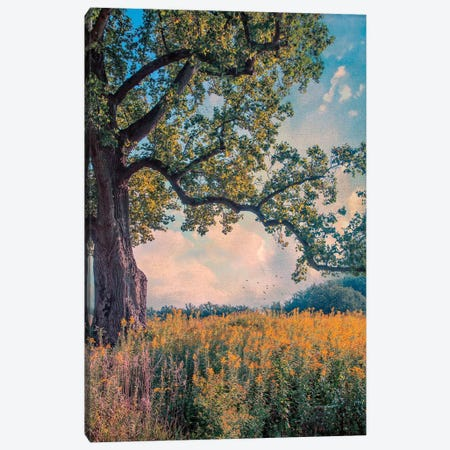 Where I Daydream Canvas Print #RVR32} by John Rivera Art Print