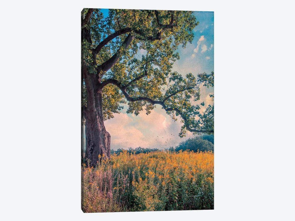 Where I Daydream by John Rivera 1-piece Canvas Art