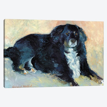 Harley Canvas Print #RWA76} by Richard Wallich Canvas Artwork