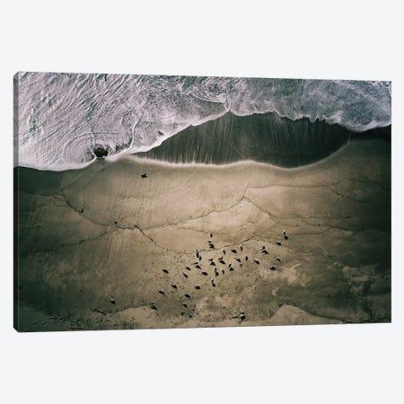 Seagulls And Surf Canvas Print #RWO2} by Robert Work Art Print