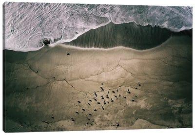 Seagulls And Surf Canvas Art Print