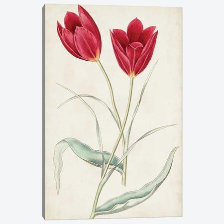 Antique Botanical Collection III Canvas Print #RWY3} by Ridgeway Canvas Artwork