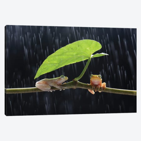 Frogs In The Rain Canvas Print #RYG28} by Robin Yong Canvas Print