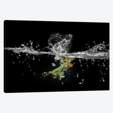 Ahah River Flying Frog Canvas Print #RYG29} by Robin Yong Canvas Art Print