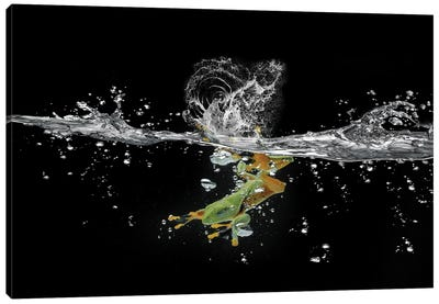 Ahah River Flying Frog Canvas Art Print