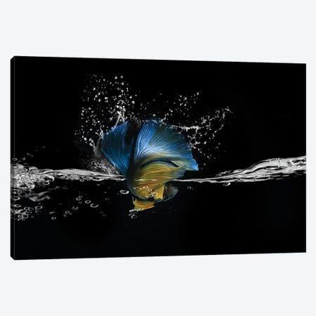 Blue Betta Splash Canvas Print #RYG2} by Robin Yong Canvas Print