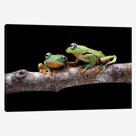 Frog Petting Canvas Print #RYG44} by Robin Yong Canvas Artwork