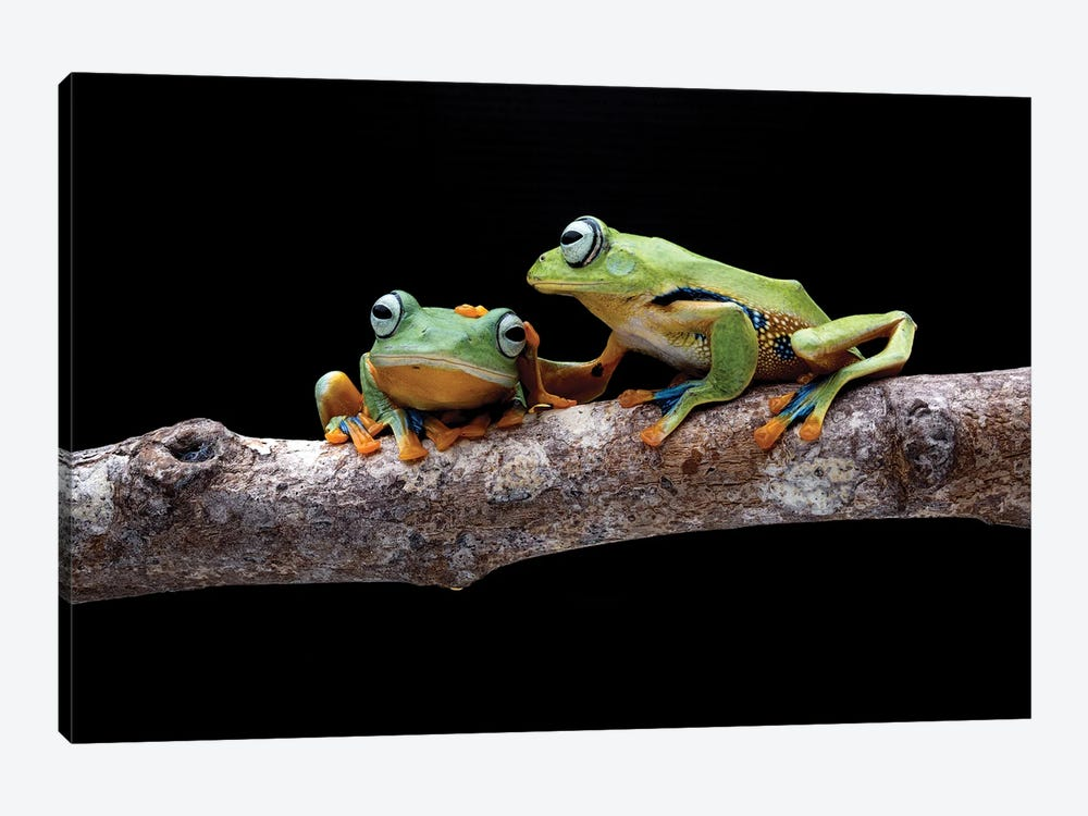 Frog Petting by Robin Yong 1-piece Canvas Print