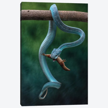 The Blue Viper Strikes Canvas Print #RYG45} by Robin Yong Canvas Wall Art