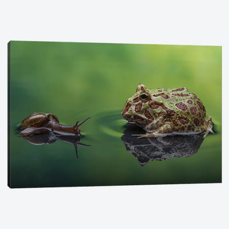 Snail And Frog Canvas Print #RYG7} by Robin Yong Canvas Wall Art