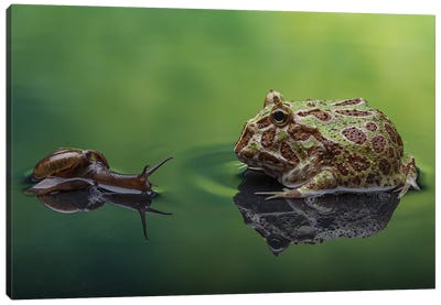 Snail And Frog Canvas Art Print