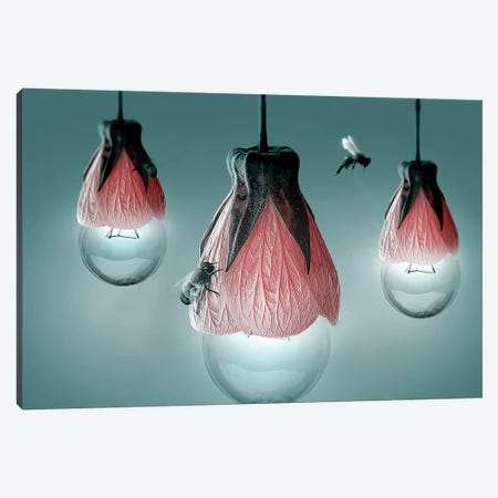 Sweet Lights Canvas Print #RYK26} by Shaun Ryken Canvas Art