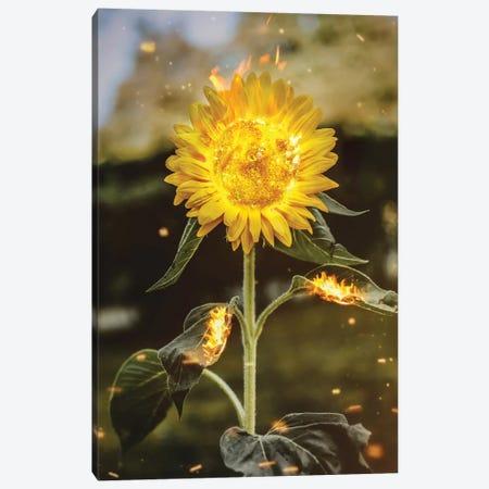 Real Sunflower Canvas Print #RYK53} by Shaun Ryken Canvas Art