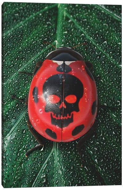 Poisonous Ladybug Canvas Art Print