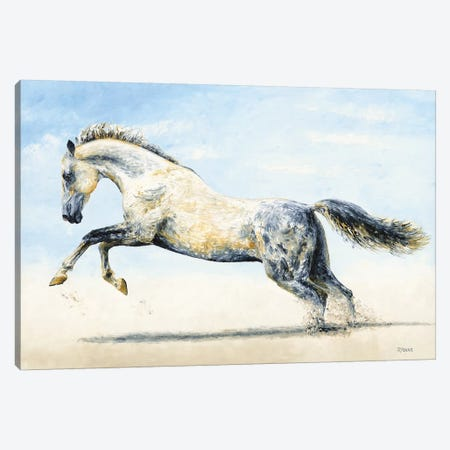 Break Free - Arabian Horse Canvas Print #RYO54} by Richard Young Canvas Print