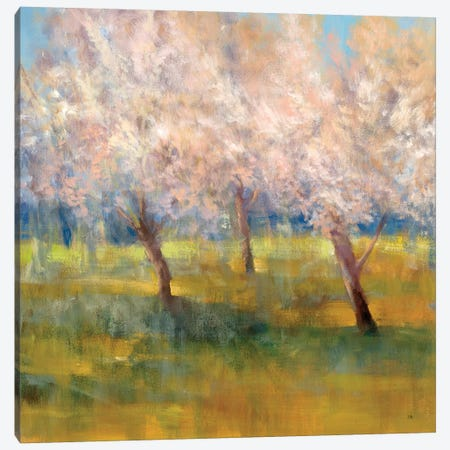 Cherry Blossoms Canvas Print #SAD5} by Simon Addyman Canvas Artwork