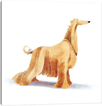 Afghan Hound Canvas Art Print