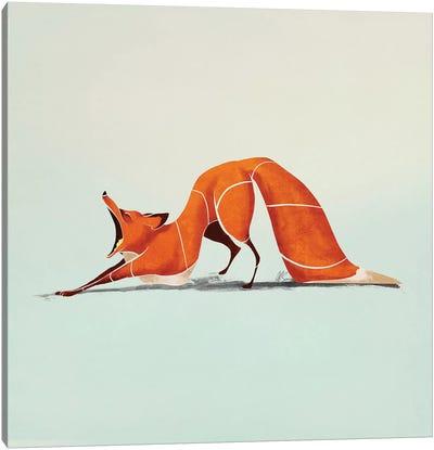 Fox III Canvas Art Print