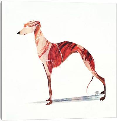 Whippet Canvas Art Print