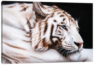 Susans Tiger Canvas Art Print