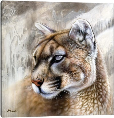Catamount Canvas Art Print