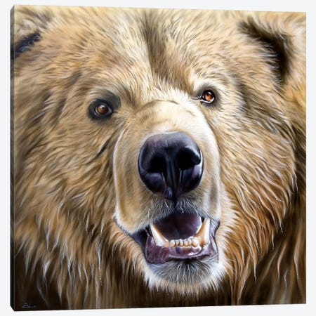Brown Bear 3-Piece Canvas #SAN7} by Sandi Baker Canvas Art