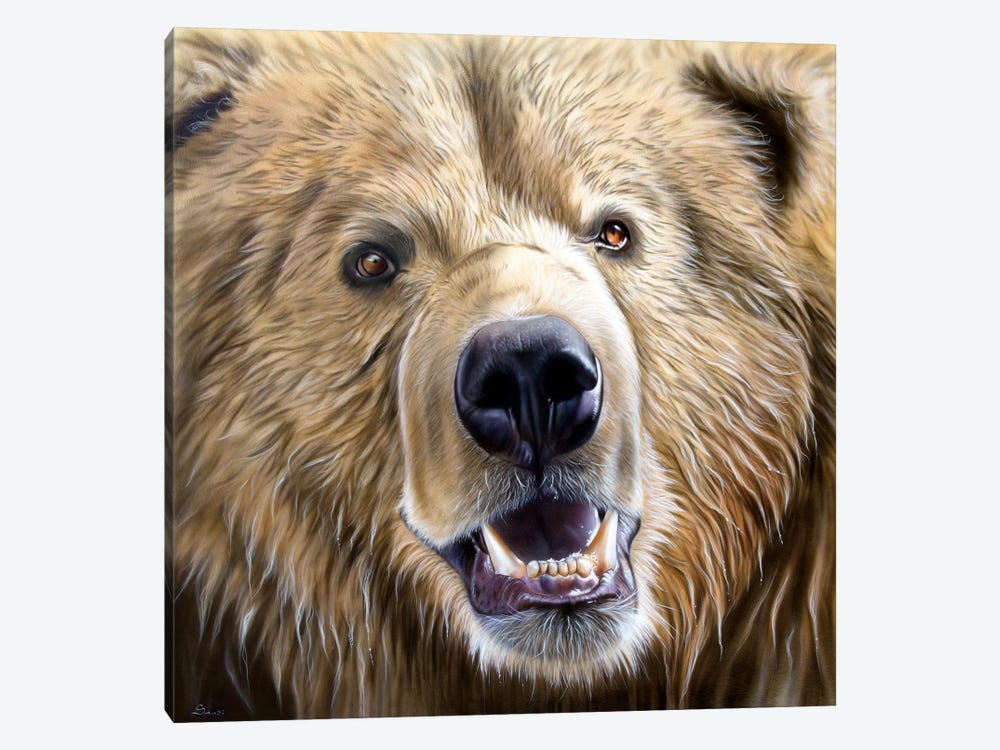 Brown Bear by Sandi Baker 1-piece Canvas Print
