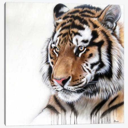 Tiger Portrait I 3-Piece Canvas #SAN86} by Sandi Baker Canvas Print