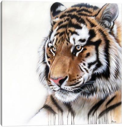 Tiger Portrait I Canvas Art Print