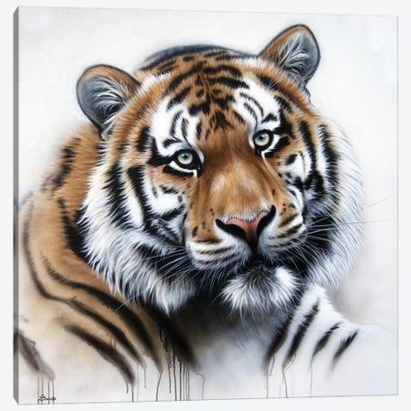 Tiger Portrait II Canvas Print #SAN87} by Sandi Baker Canvas Print