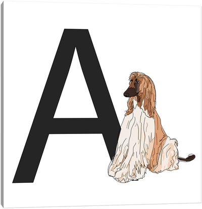 A Is For Afghan Hound Canvas Art Print