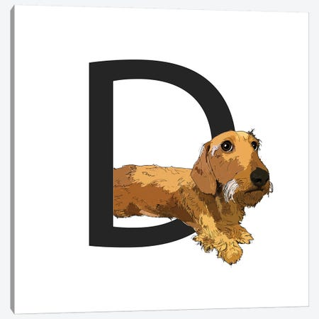 D Is For Dachshund Canvas Print #SAP113} by Sketch and Paws Canvas Print