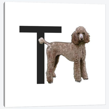 T Is For Toy Poodle Canvas Print #SAP129} by Sketch and Paws Canvas Artwork