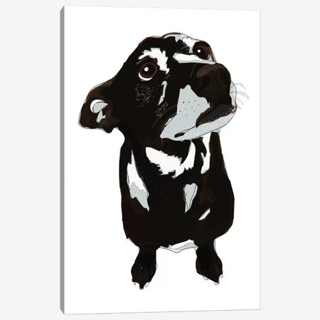 Oreo Canvas Print #SAP93} by Sketch and Paws Canvas Print