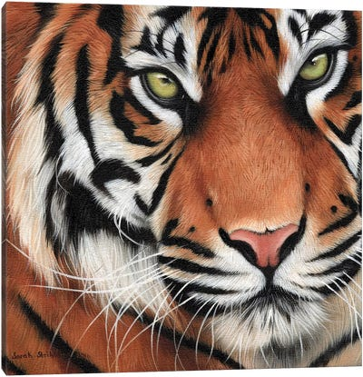 Tiger Close-Up II Canvas Art Print