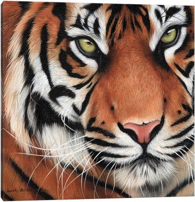 Tiger Close-Up II Canvas Art Print