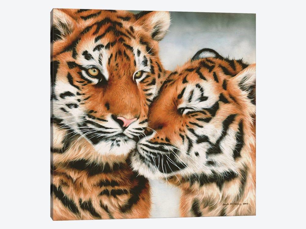Tiger Cubs Snuggle by Sarah Stribbling 1-piece Art Print