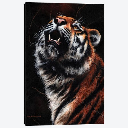 Tiger II 3-Piece Canvas #SAS103} by Sarah Stribbling Canvas Wall Art
