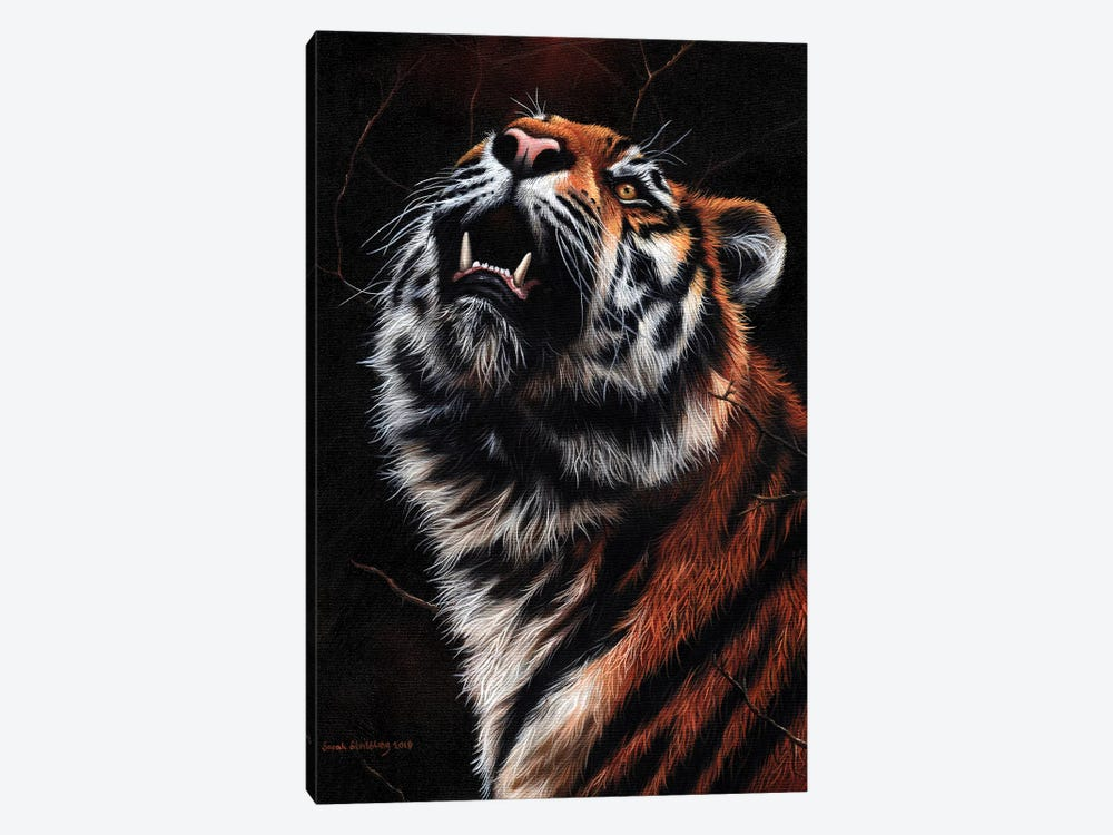 Tiger II by Sarah Stribbling 1-piece Art Print