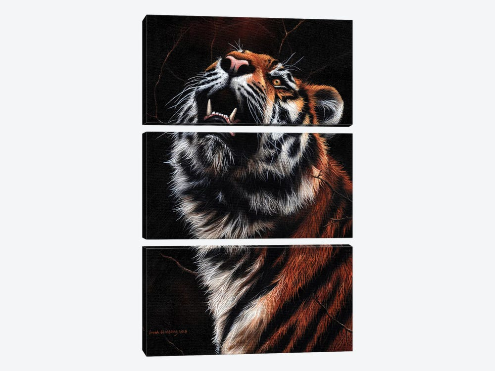 Tiger II by Sarah Stribbling 3-piece Canvas Print