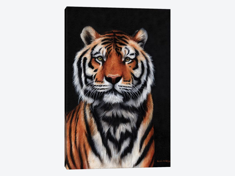 Tiger III by Sarah Stribbling 1-piece Canvas Wall Art