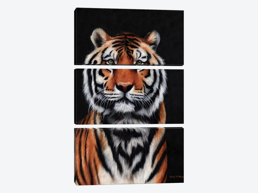 Tiger III by Sarah Stribbling 3-piece Canvas Artwork