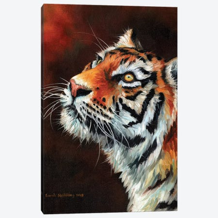 Tiger IV 3-Piece Canvas #SAS105} by Sarah Stribbling Canvas Print