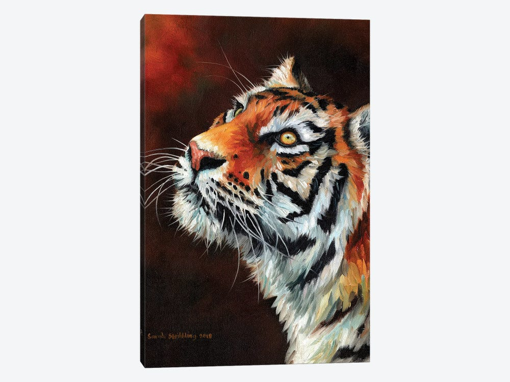 Tiger IV by Sarah Stribbling 1-piece Canvas Art Print