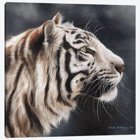 White Tiger I Canvas Print #SAS106} by Sarah Stribbling Canvas Art Print
