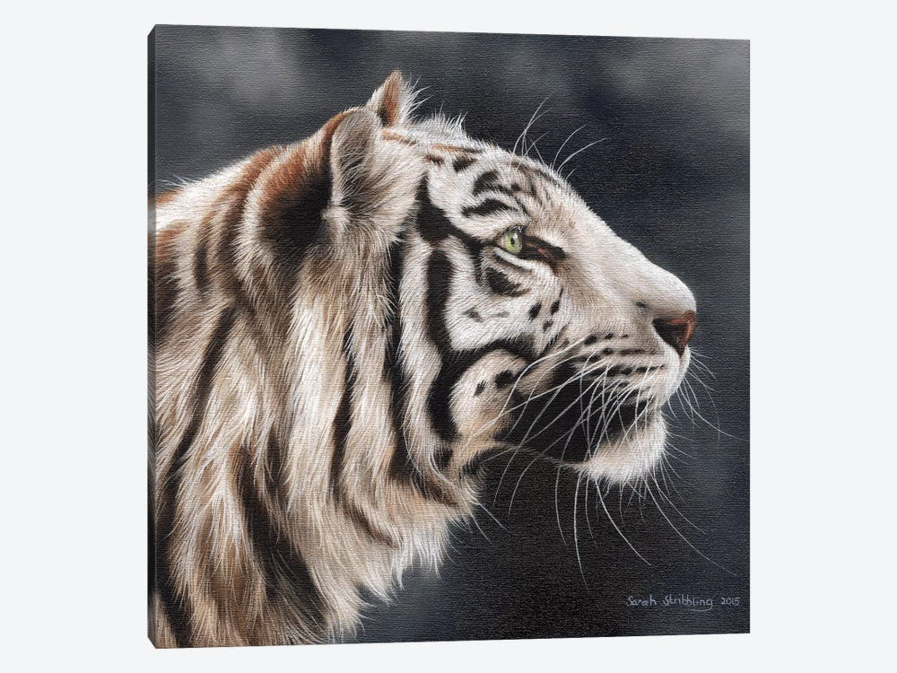 White Tiger I by Sarah Stribbling 1-piece Canvas Wall Art