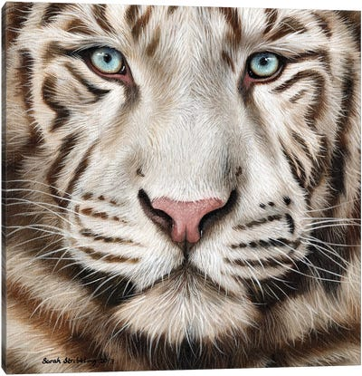 White Tiger II Canvas Art Print