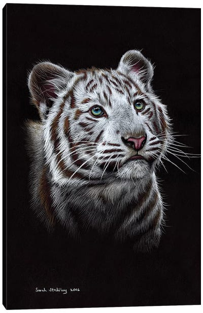 White Tiger III Canvas Art Print
