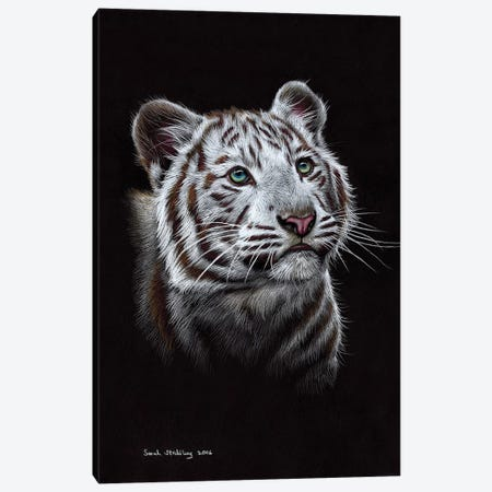 White Tiger III 3-Piece Canvas #SAS108} by Sarah Stribbling Canvas Artwork